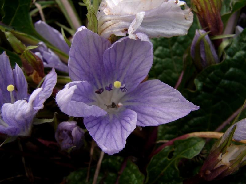Flora Vascular Toda La Informacion Detallada Sobre La Flora