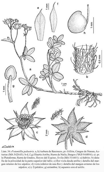 Flora Vascular - Toda la información detallada sobre la Flora ...